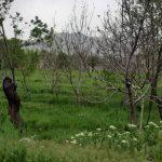 زمین مزروعی 2500 متری الویجان